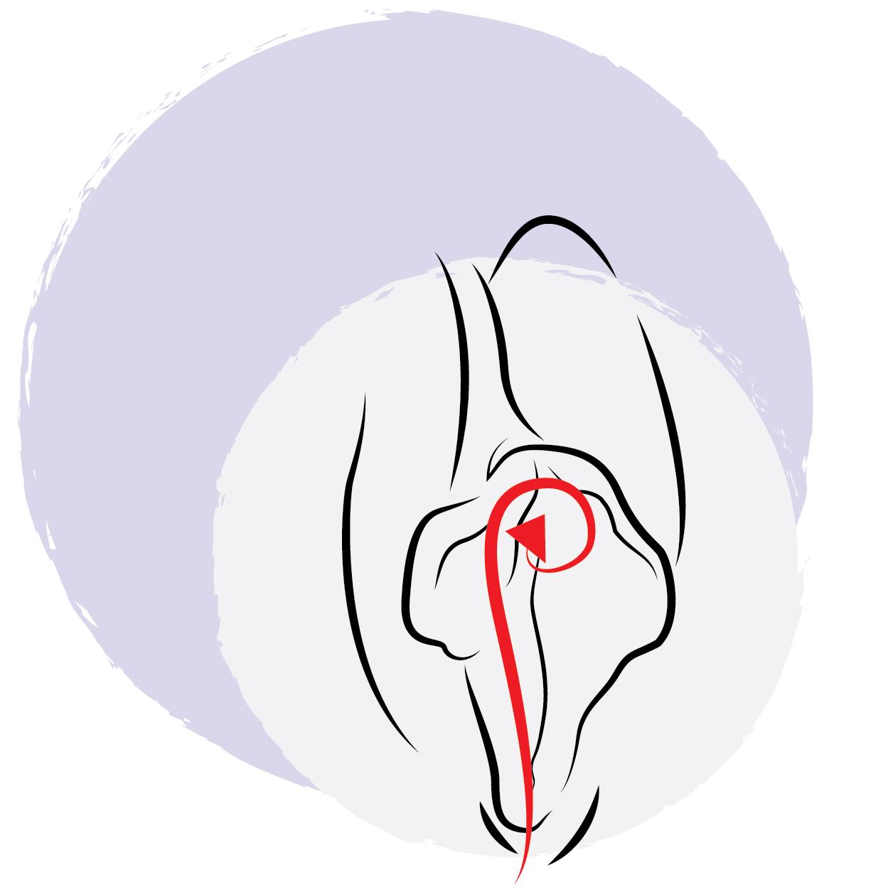 Lickjob Technik - die Klitoris beim Oralsex stimulieren