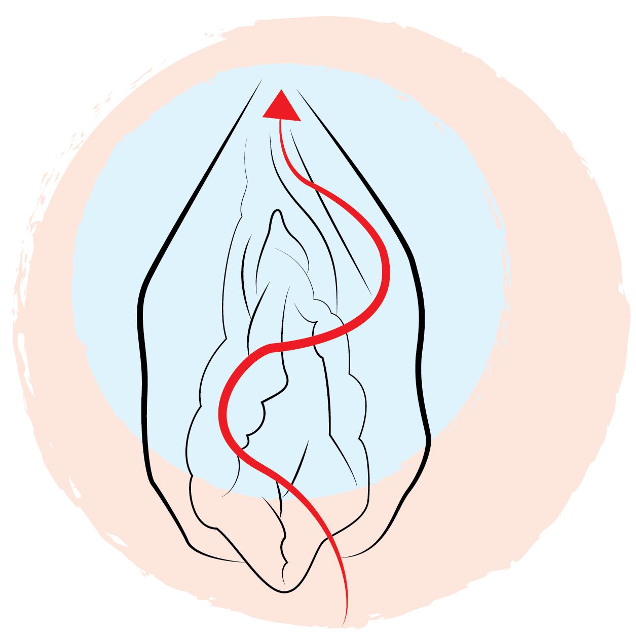 Oralsex Techniken