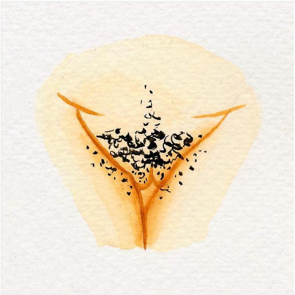 Vulva Art gegen Vulva Shaming