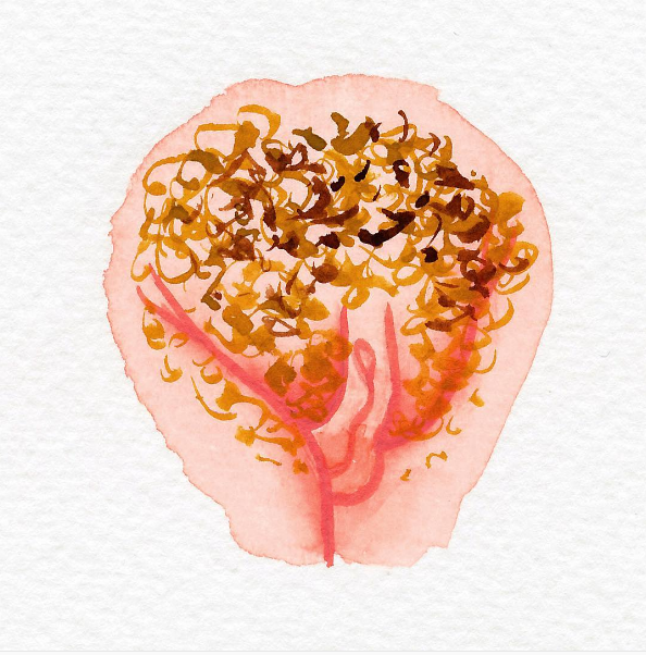 Vulva Shaming